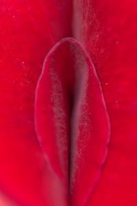 rosepetalfold